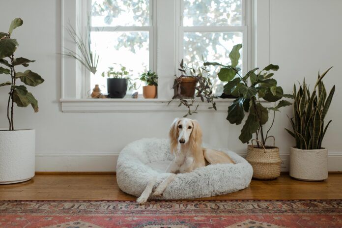 Best Dog Beds in UK