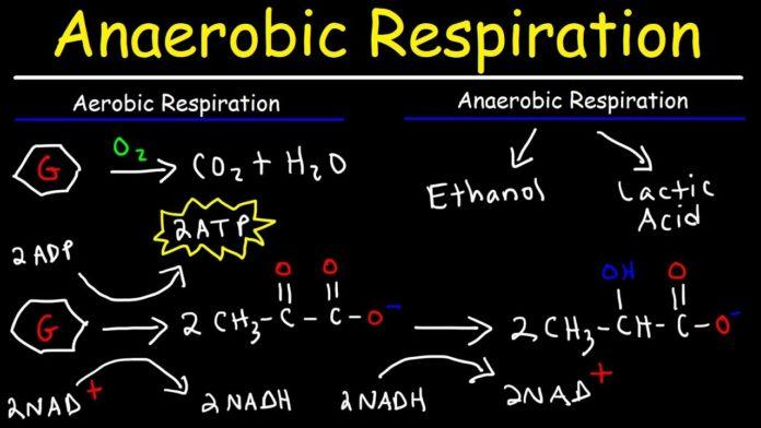 aerobic respiration equation